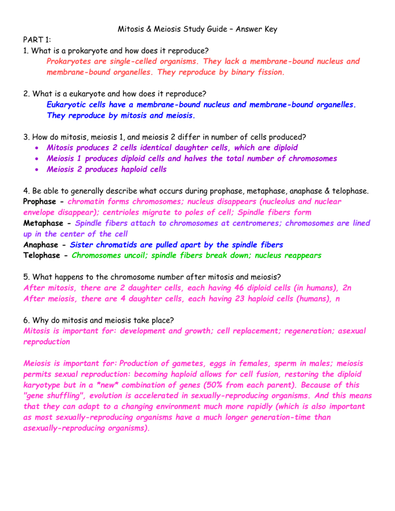 Meiosis 1 And Meiosis 2 Worksheet Answer Key — excelguider.com