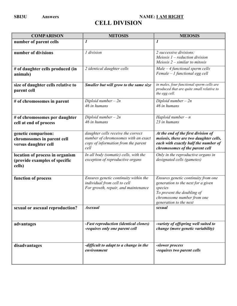 Mitosis Vs Meiosis Chart With Mitosis And Meiosis Worksheet Answer Key