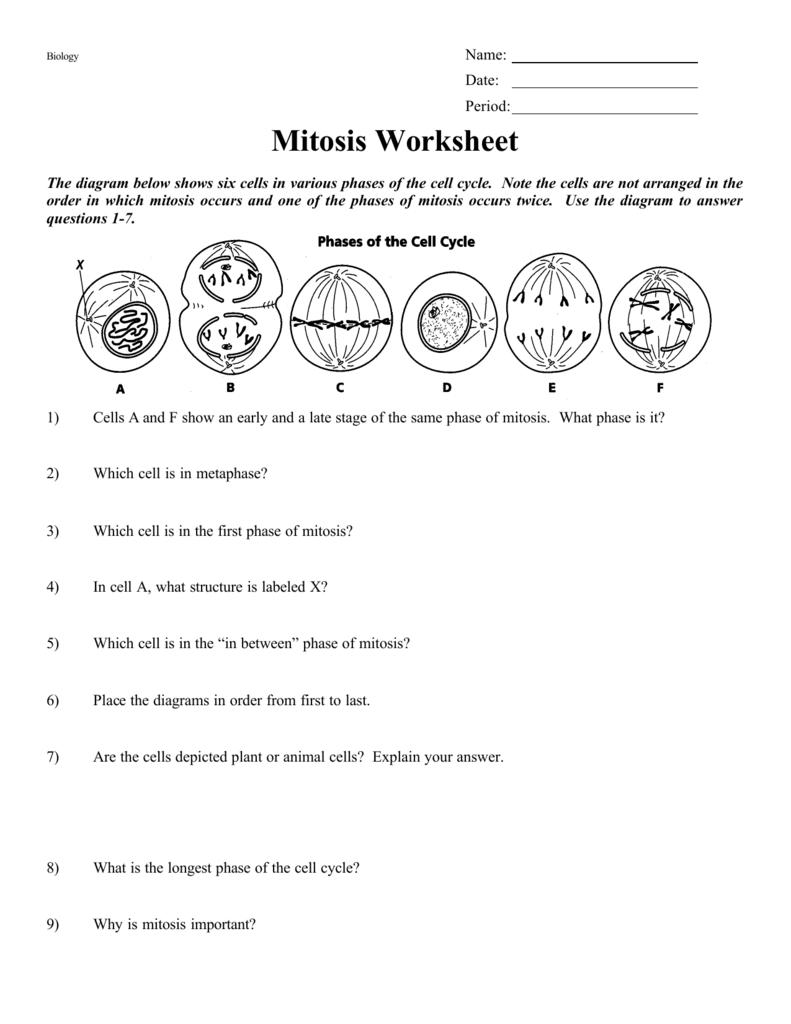 Mitosis Worksheet Or Mitosis Worksheet Answers