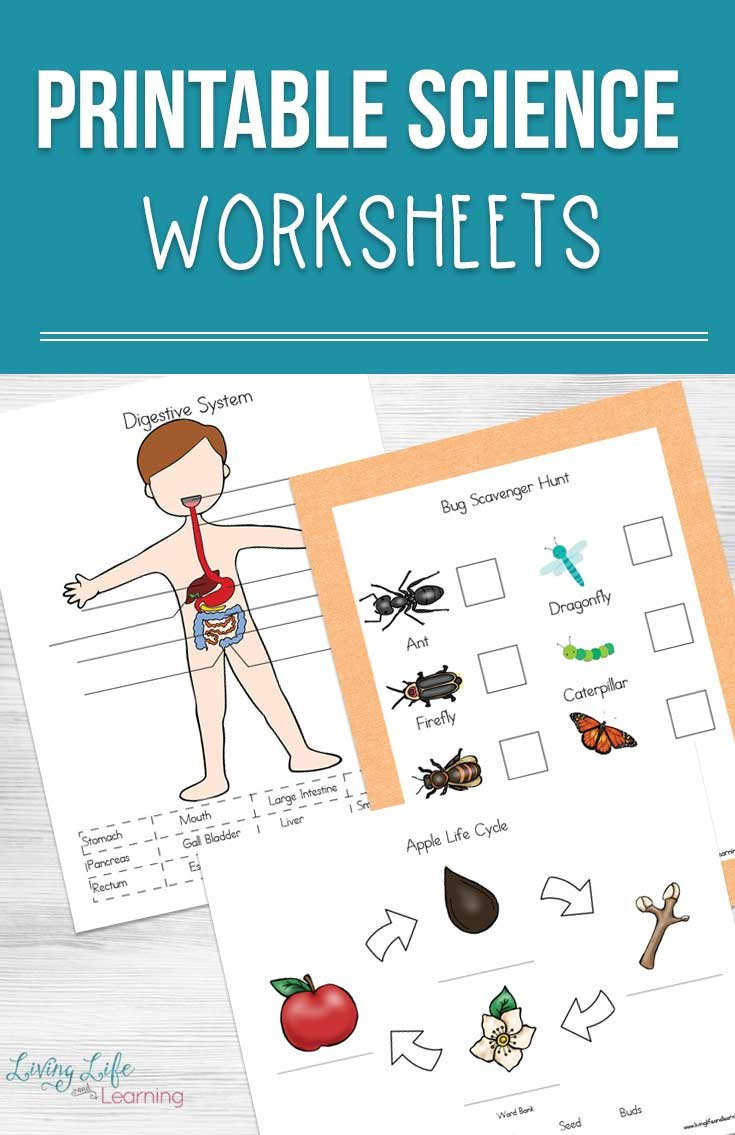 Printable Science Worksheets For Kids Within Science Worksheets For Kids