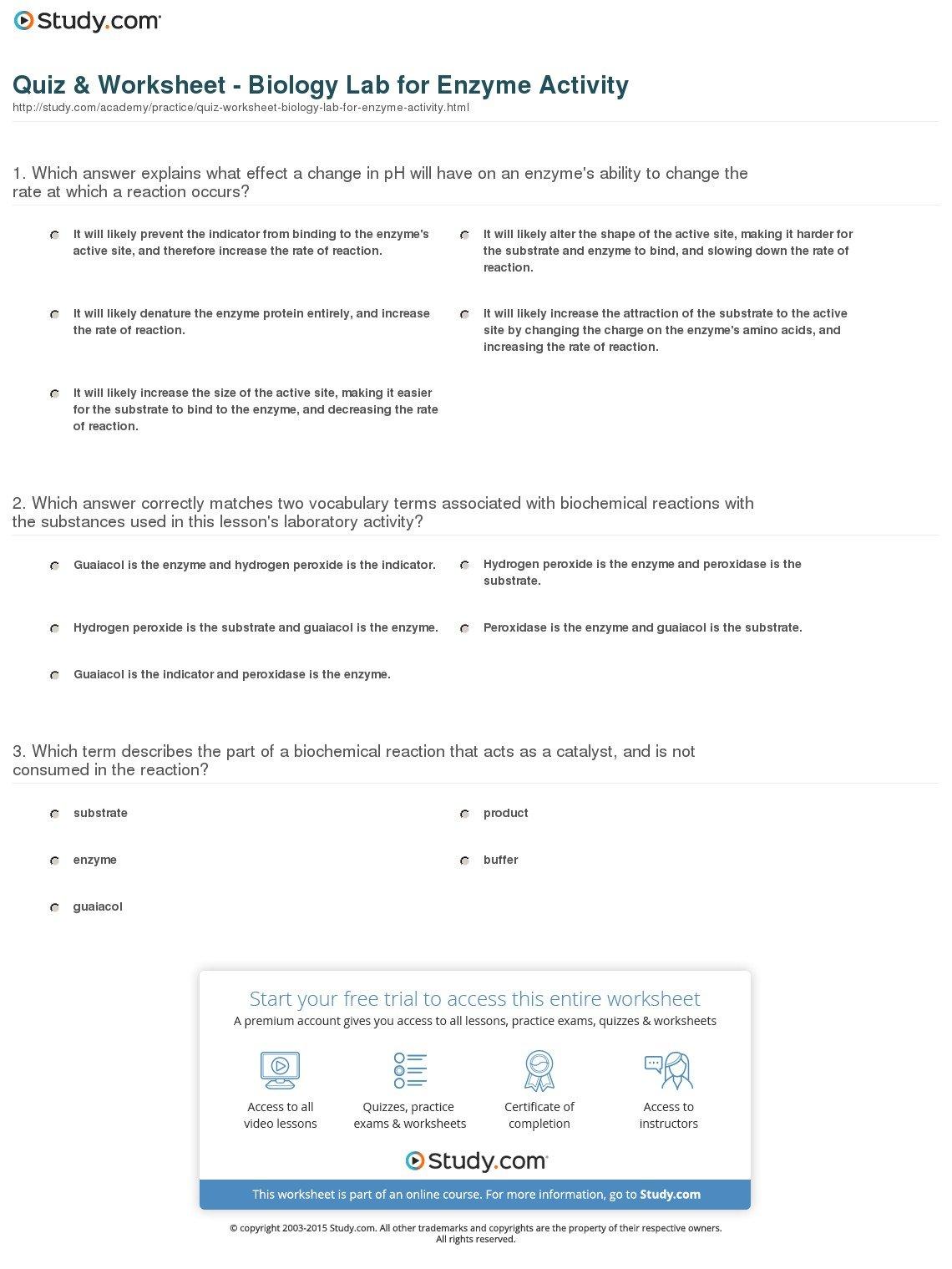 Quiz  Worksheet  Biology Lab For Enzyme Activity  Study With Enzyme Worksheet Biology