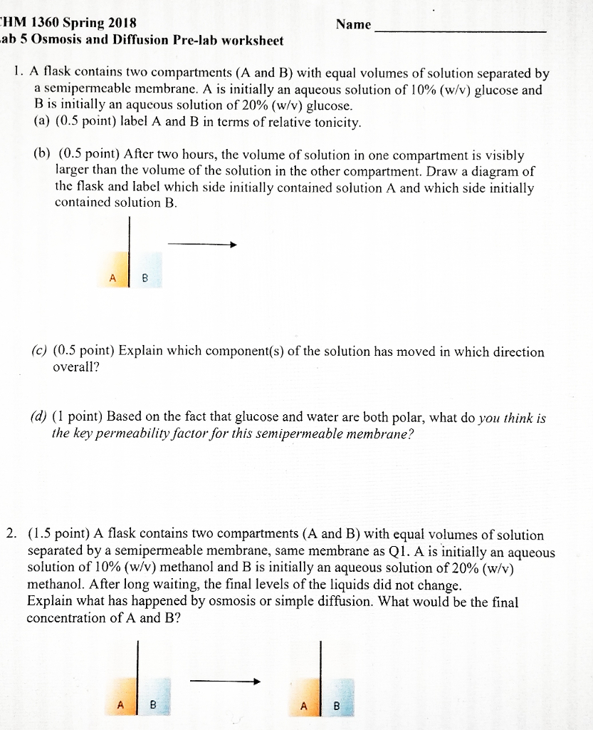Solved Hm 1360 Spring 2018 Ab 5 Osmosis And Diffusion Pre Along With Osmosis And Tonicity Worksheet