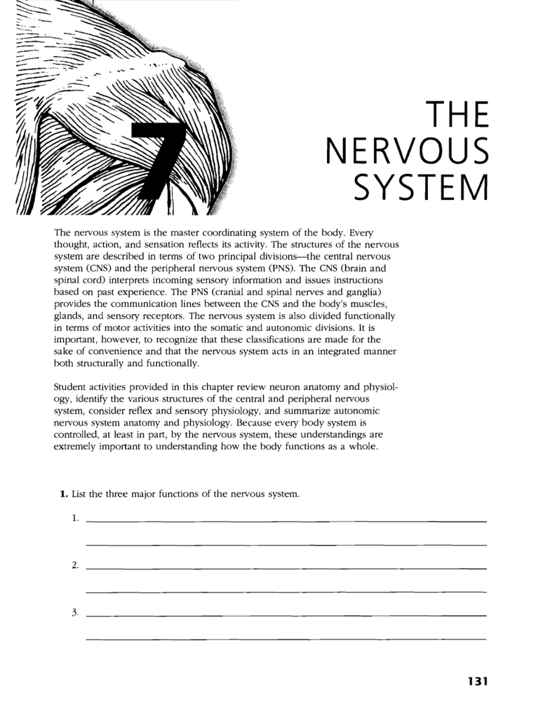 The Nervous System With Organization Of The Nervous System Worksheet Answers