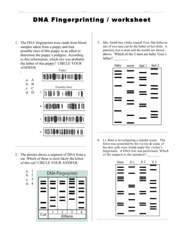 Dna Fingerprinting Worksheet Answers — excelguider.com