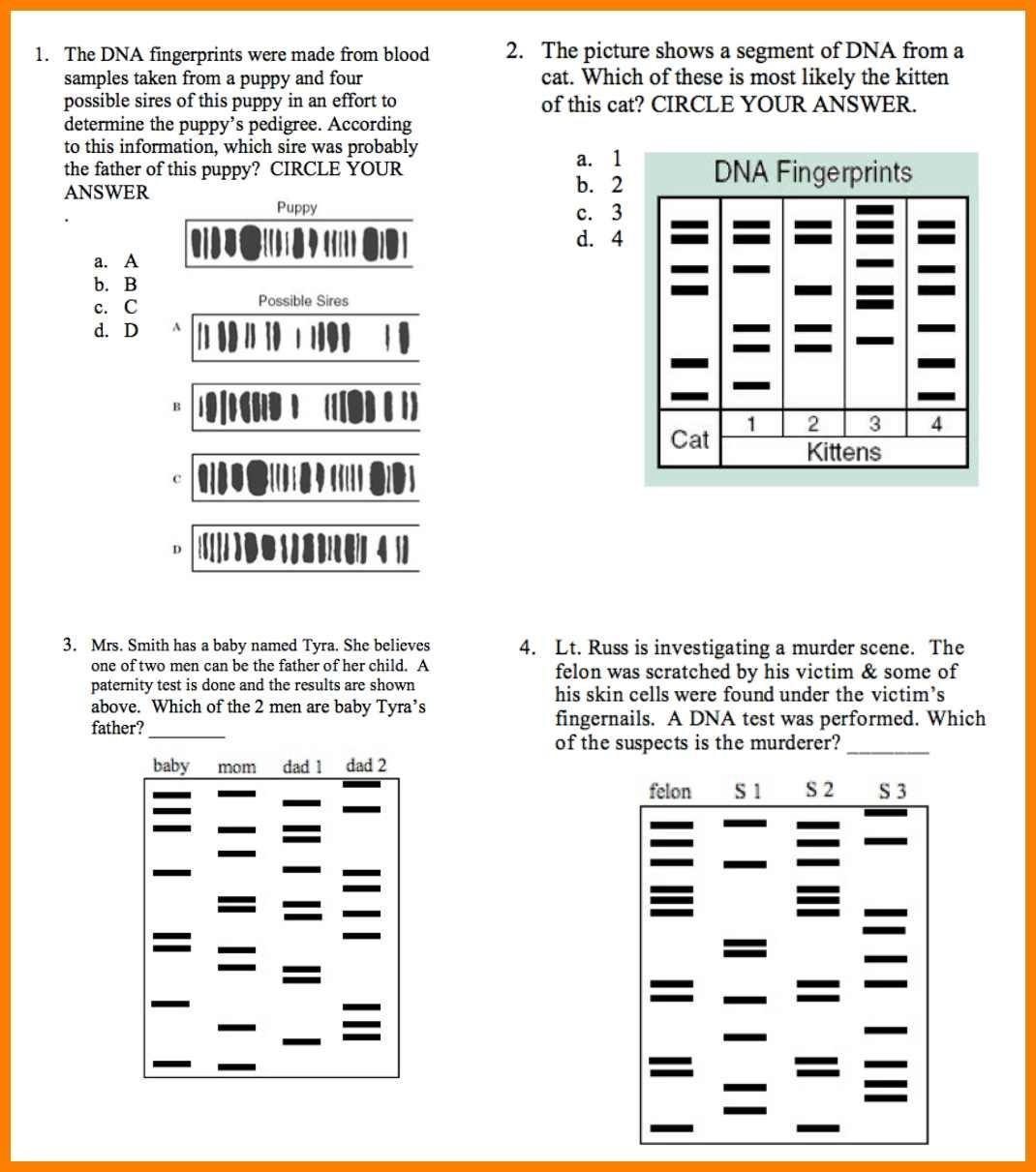 Worksheet Dna Fingerprinting Worksheet Worksheets Dna Intended For Dna Fingerprinting And Paternity Worksheet Answer Key