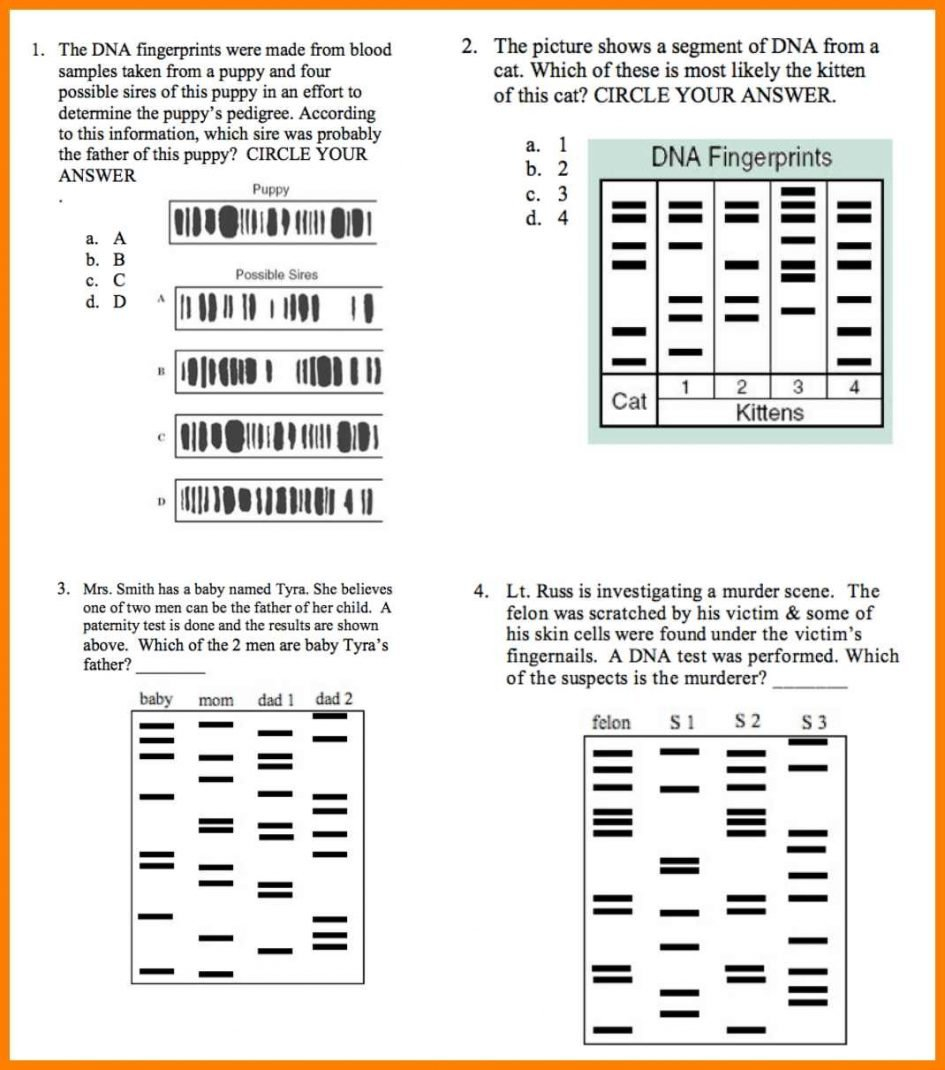 Worksheet Dna Fingerprinting Worksheet Worksheets Dna Throughout Fingerprint Worksheet Answers