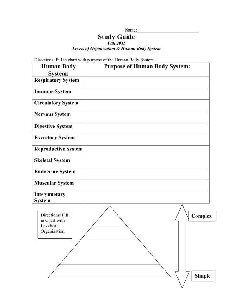 Worksheet Levels Of Organization Worksheet Study Guide Levels Of Along With Levels Of Organization Worksheet Answers