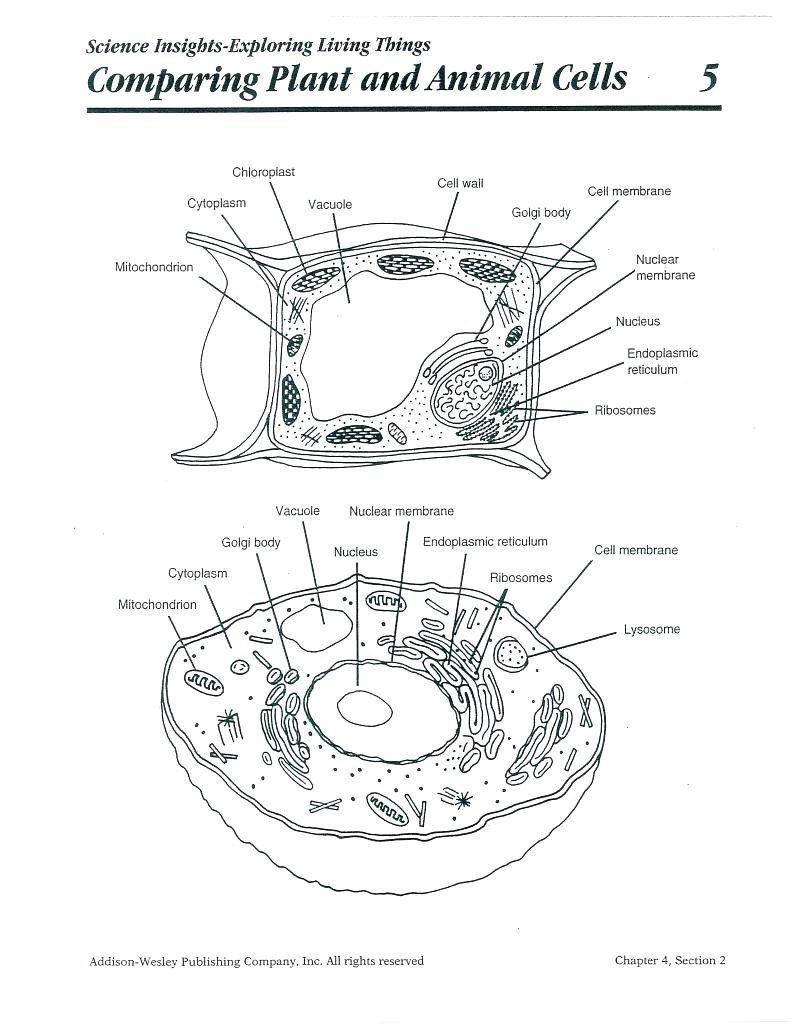 Worksheet Plant And Animal Cell Worksheet Quiz Worksheet Comparing And Comparing Plant And Animal Cells Worksheet