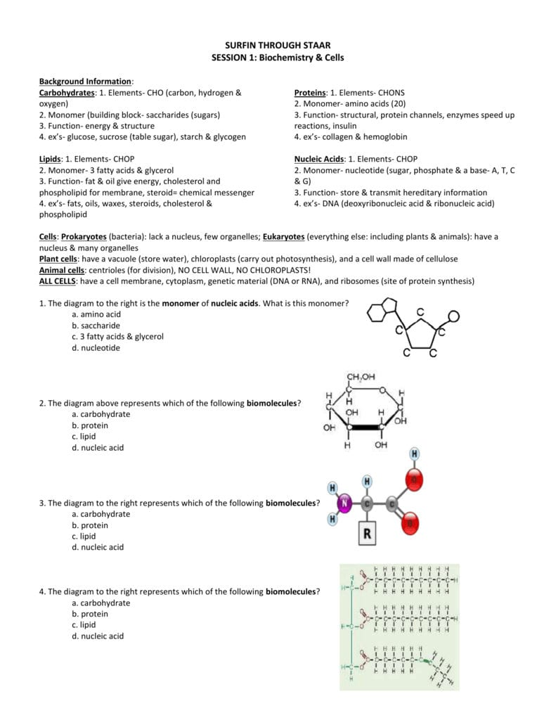 1 Biomoleculesteacher Key For Biomolecules Worksheet Answer Key