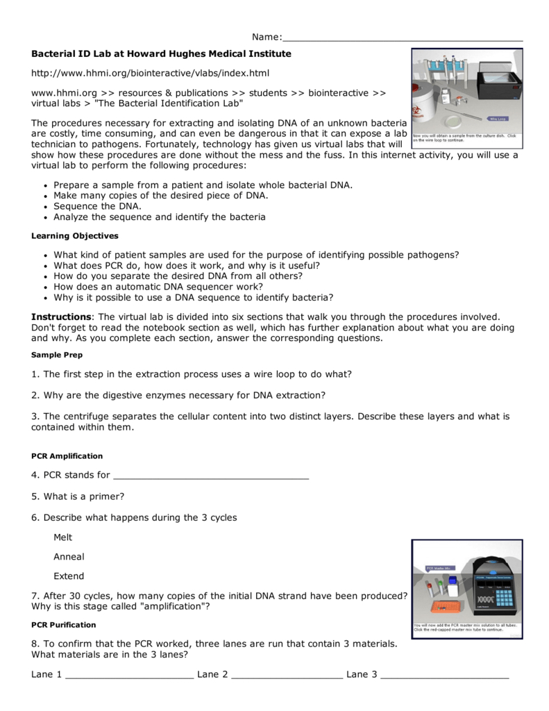 Bacterial Id Lab At Hhmi Key For Bacterial Identification Lab Worksheet Answers