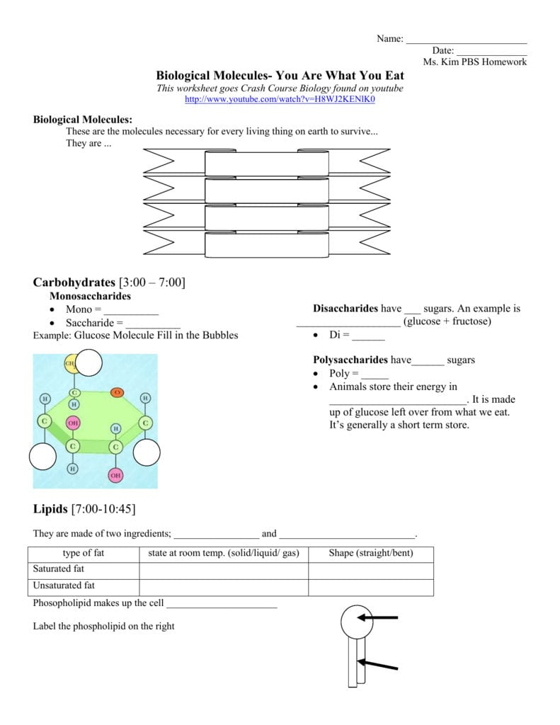 Biological Molecules You Are What You Eat Homework Assignment Or Biomolecules Worksheet Answer Key