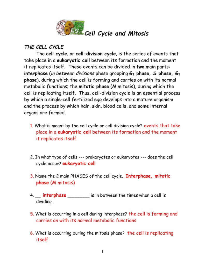 Cell Cycle And Mitosis Packet Together With Cell Cycle And Mitosis Worksheet Answers