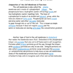 Cell Membrane Answer Key And Cell Membrane Worksheet Answers