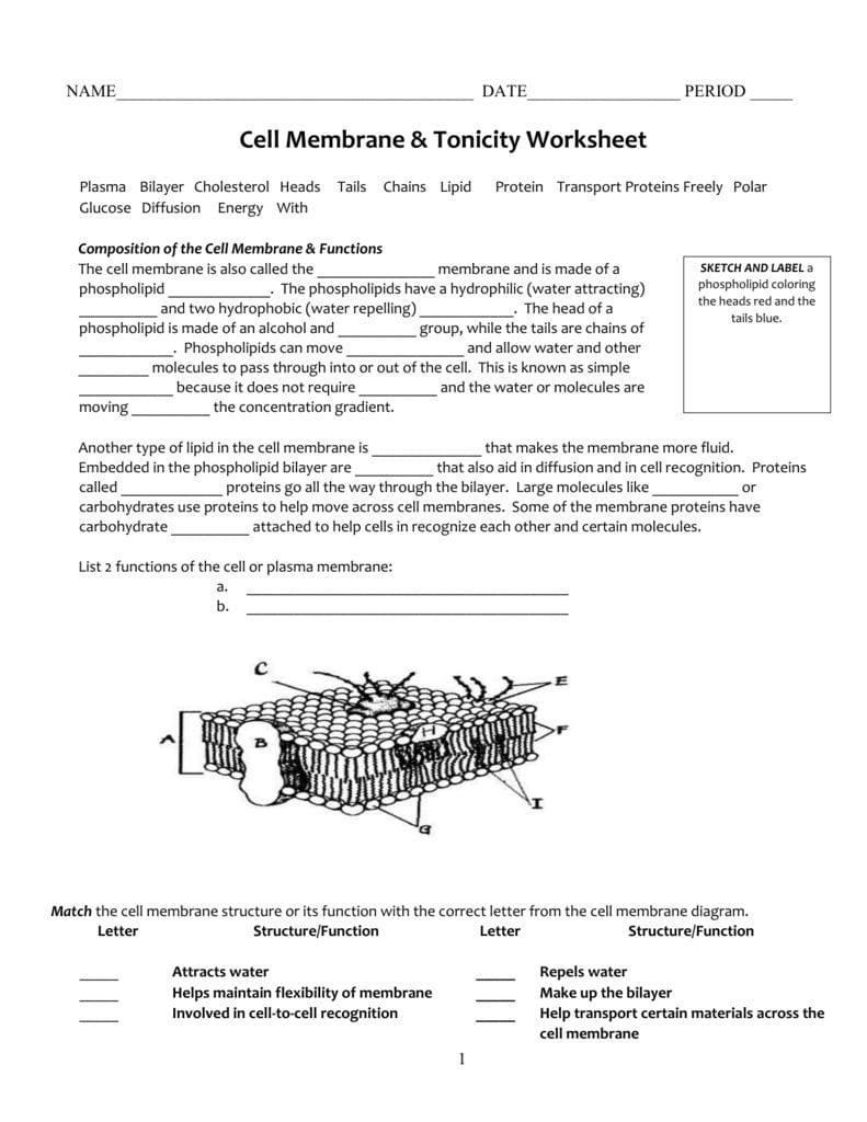 Cell Membrane  Tonicity Worksheet Intended For Cell Membrane Amp Tonicity Worksheet