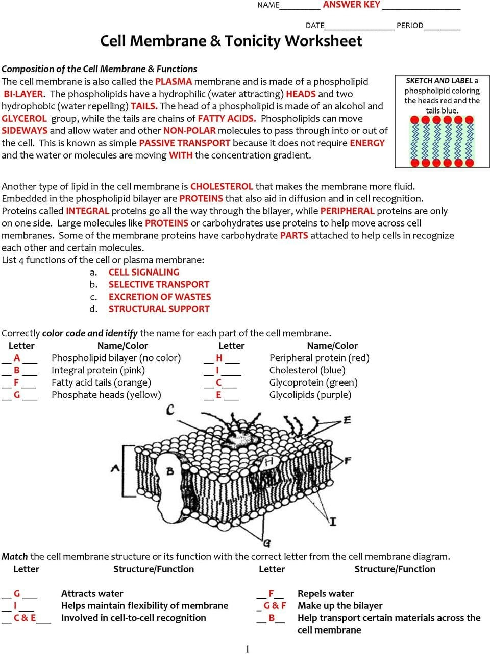 Cell Membrane  Tonicity Worksheet  Pdf With Regard To Cell Membrane Amp Tonicity Worksheet