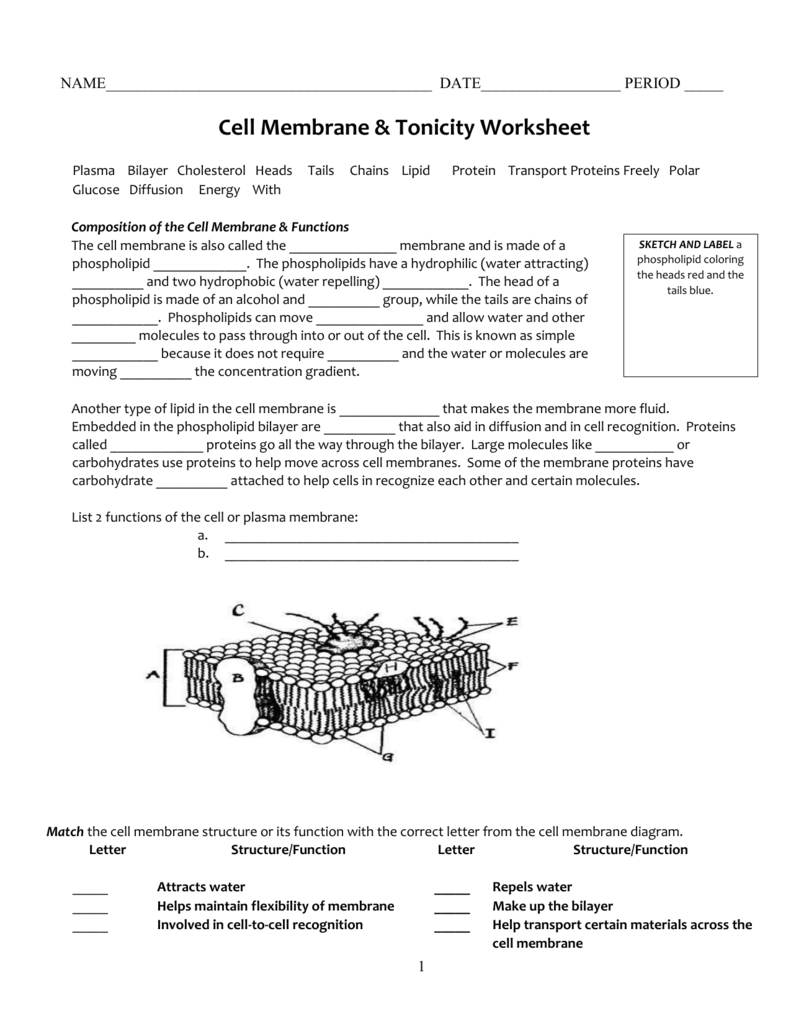 Cell Membrane  Tonicity Worksheet Within Cell Membrane Structure And Function Worksheet