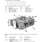 Cell Membrane Worksheet Answers Cell Membrane Worksheet Google Intended For Cell Membrane Worksheet Answers