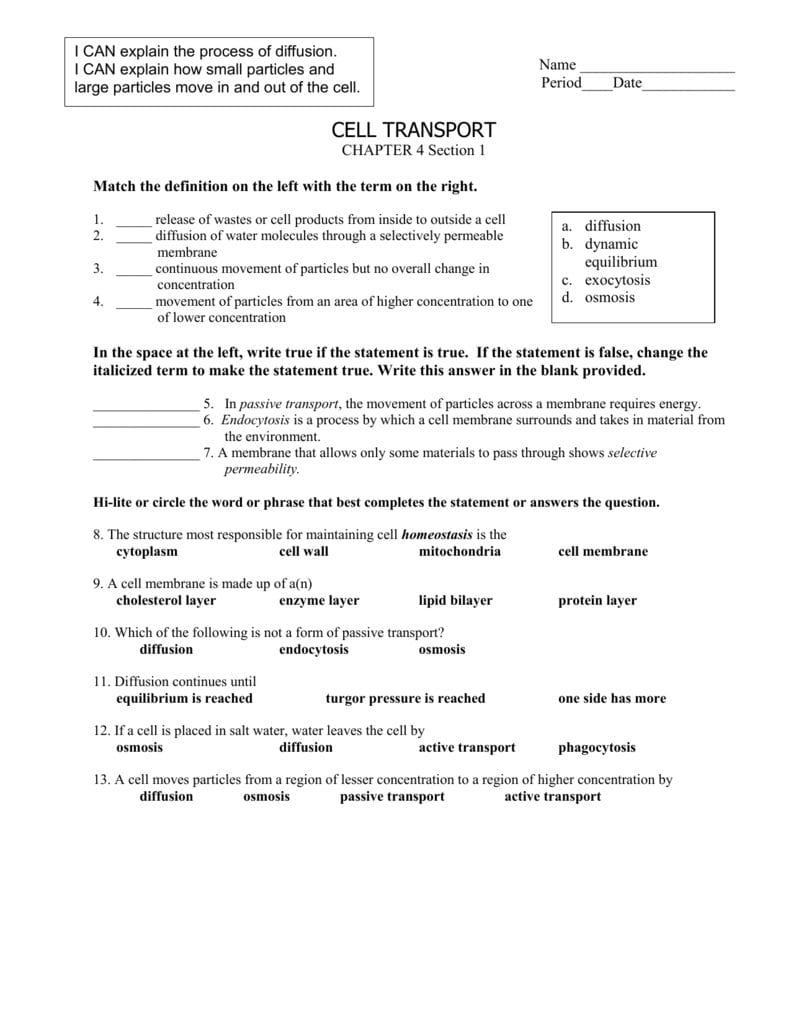 Cell Transport Worksheet Also Passive Transport Worksheet Answers