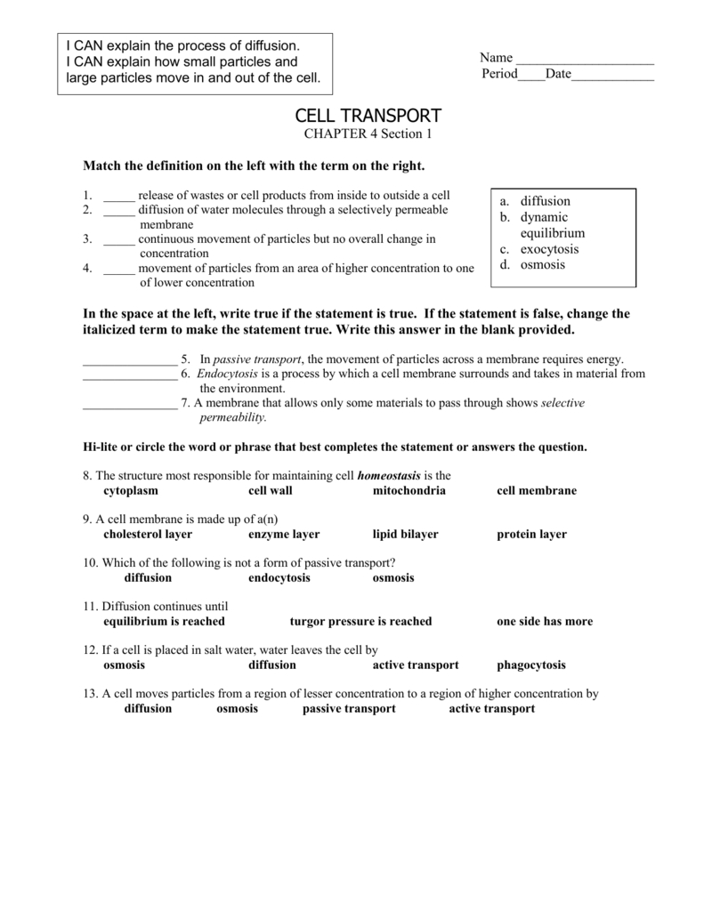 Cell Transport Worksheet Also Passive Transport Worksheet Answers