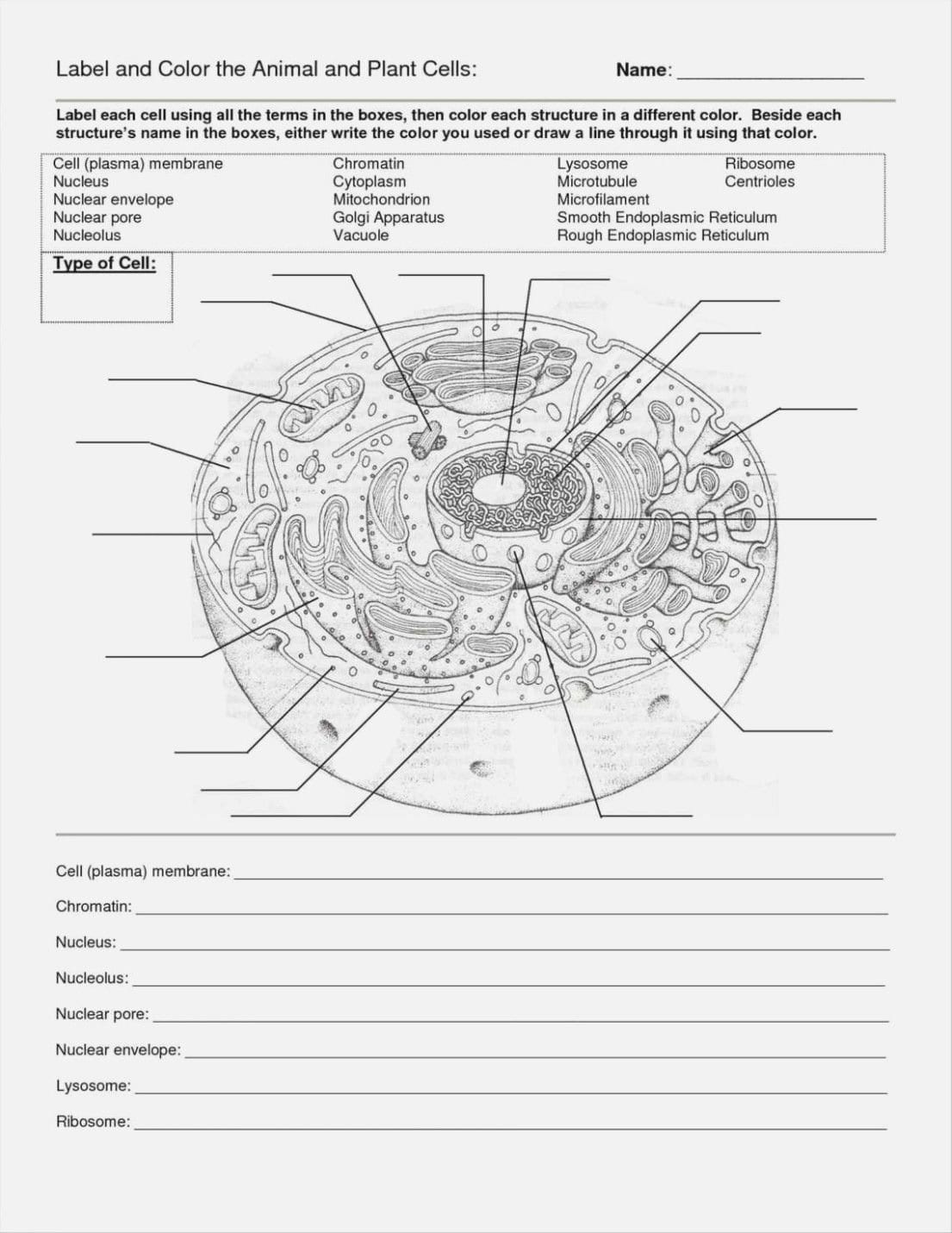 Cells Alive Bacterial Cell Worksheet Answer Key  Briefencounters Inside Cells Alive Bacterial Cell Worksheet Answer Key
