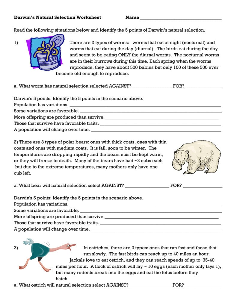 Darwins Natural Selection Worksheet Pertaining To Natural Selection Worksheet