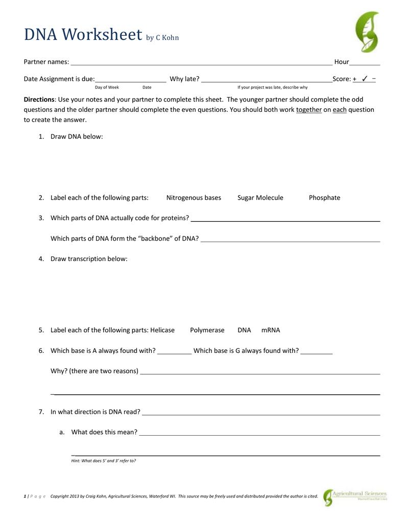 Dna Base Pairing Worksheet Answer In Dna Base Pairing Worksheet