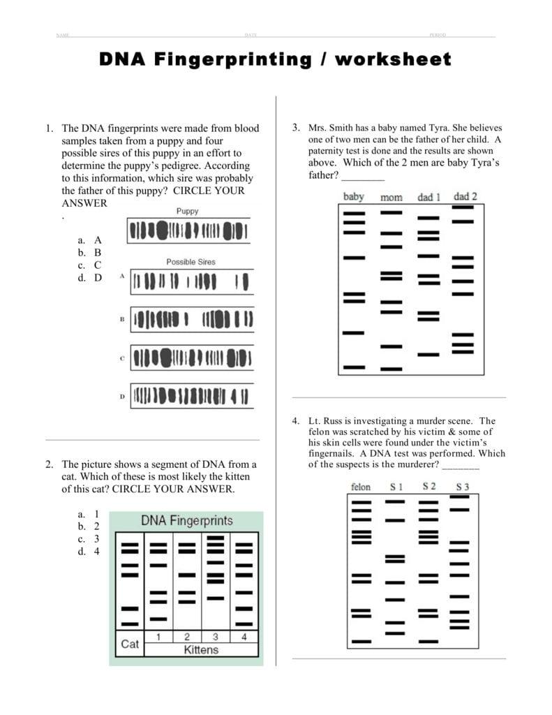 Dna Fingerprinting  Worksheet Along With Dna Profiling Worksheet