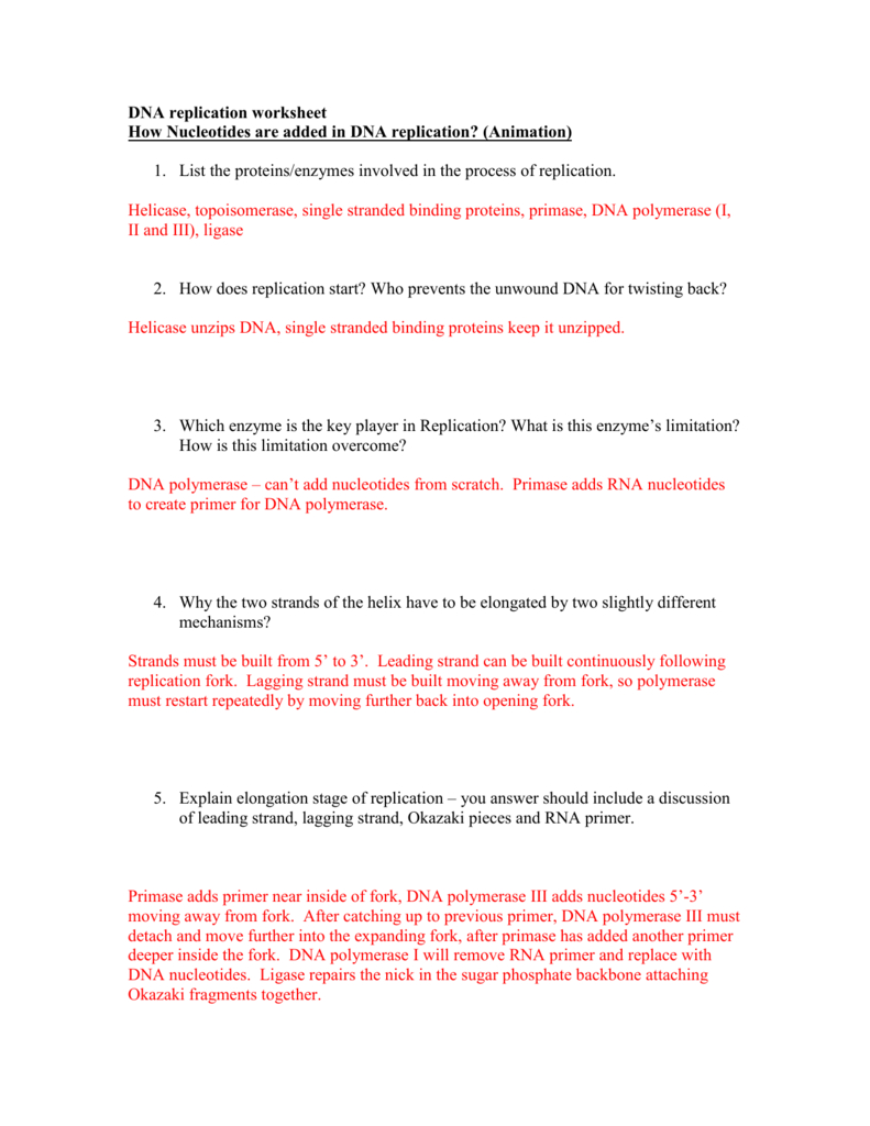 Dna Replication Worksheet – Watch The Animations And Answer With Regard To Dna Structure Worksheet Answers