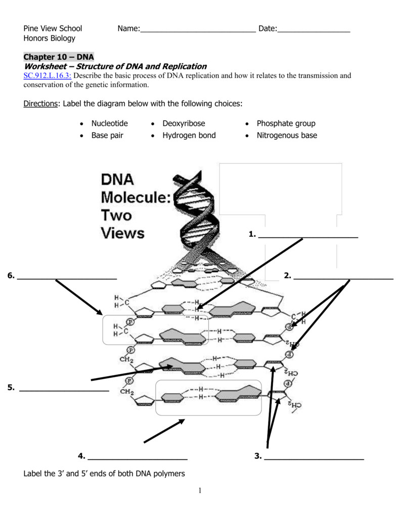 Dna Worksheet Inside Structure Of Dna And Replication Worksheet Answers