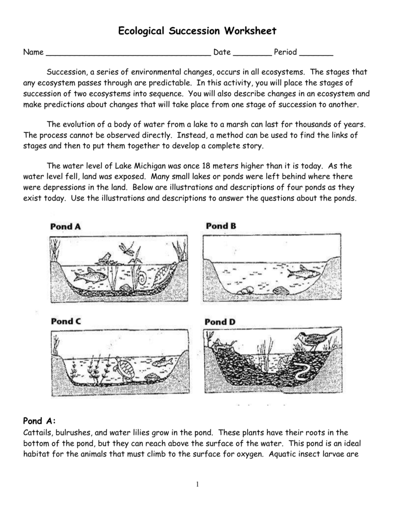 Ecological Succession Worksheet For Succession Worksheet Answers