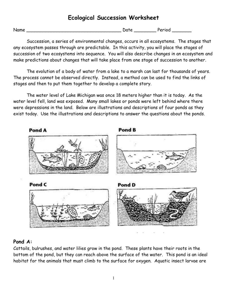 Ecological Succession Worksheet Pond Key For Succession Worksheet Answers