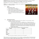 Evidence Of Evolution  Fort Bend Isd  Homepage Throughout Evidence Of Evolution Worksheet Answers