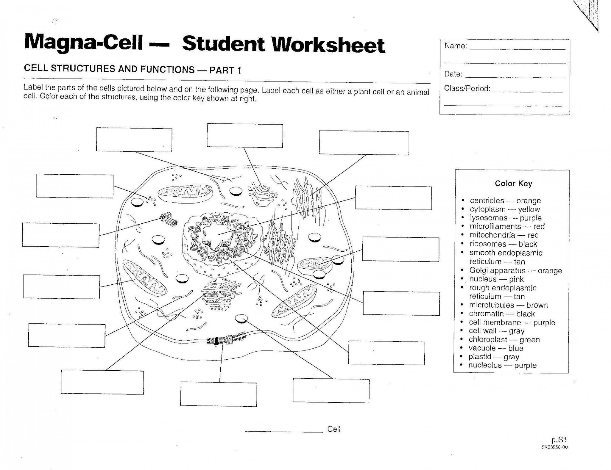 Inside The Cell Worksheet Answers  Briefencounters For Inside The Cell Worksheet Answers