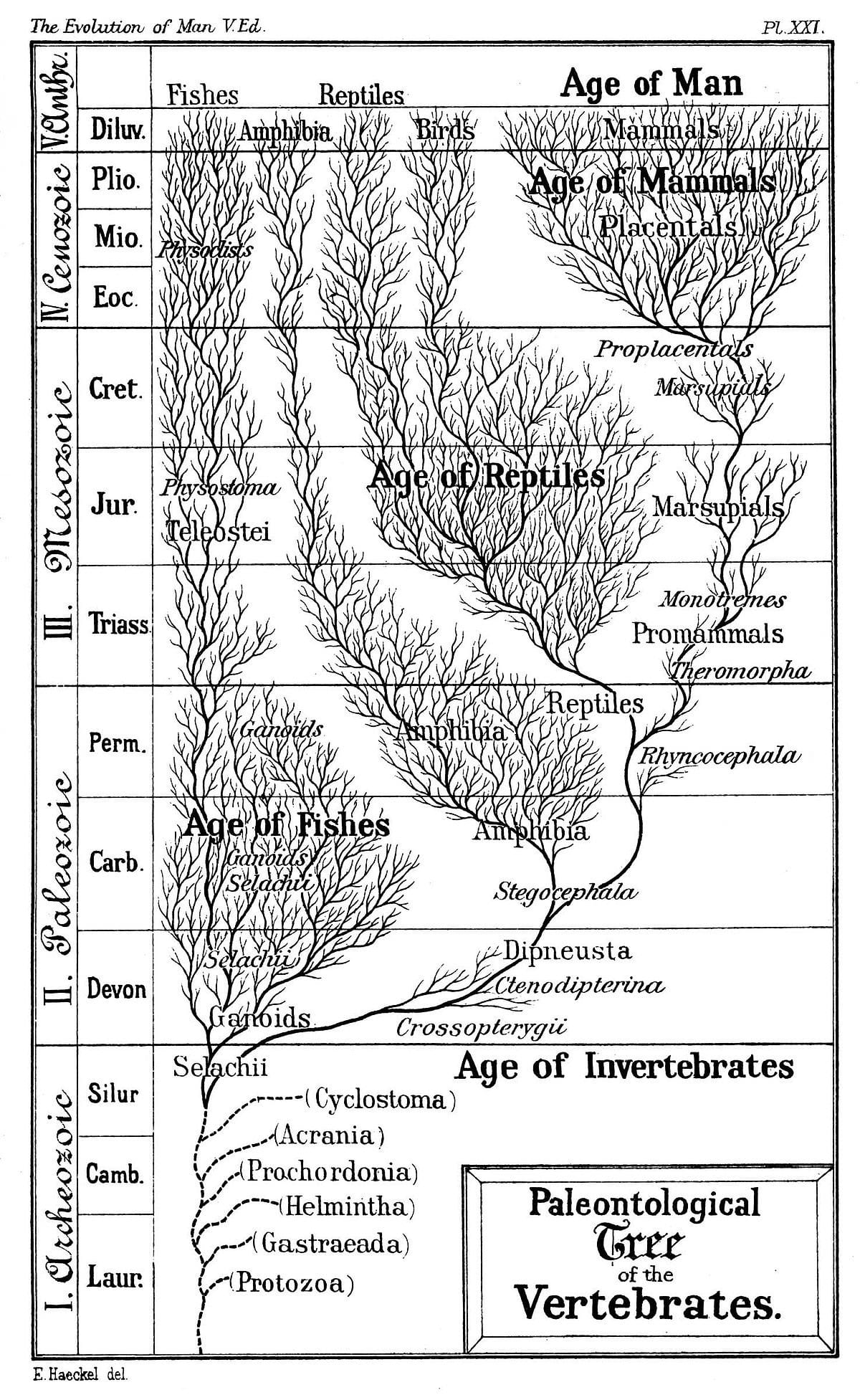 Introduction To Evolution  Wikipedia Also Evidence Of Evolution Worksheet Answers