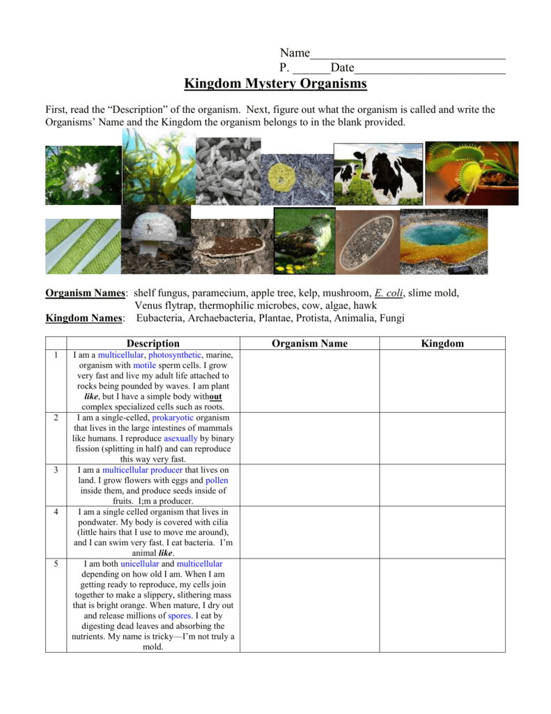 Kingdom Classification Worksheet Along With Kingdom Classification Worksheet Answers