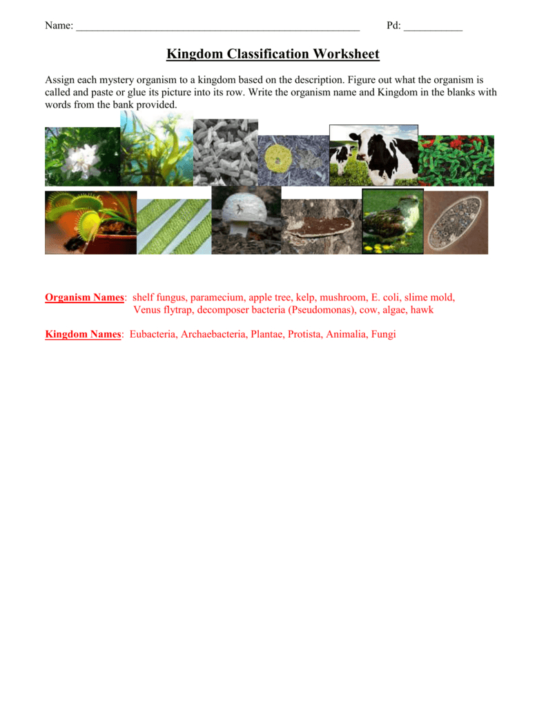 Kingdom Classification Worksheet And Kingdom Classification Worksheet Answers