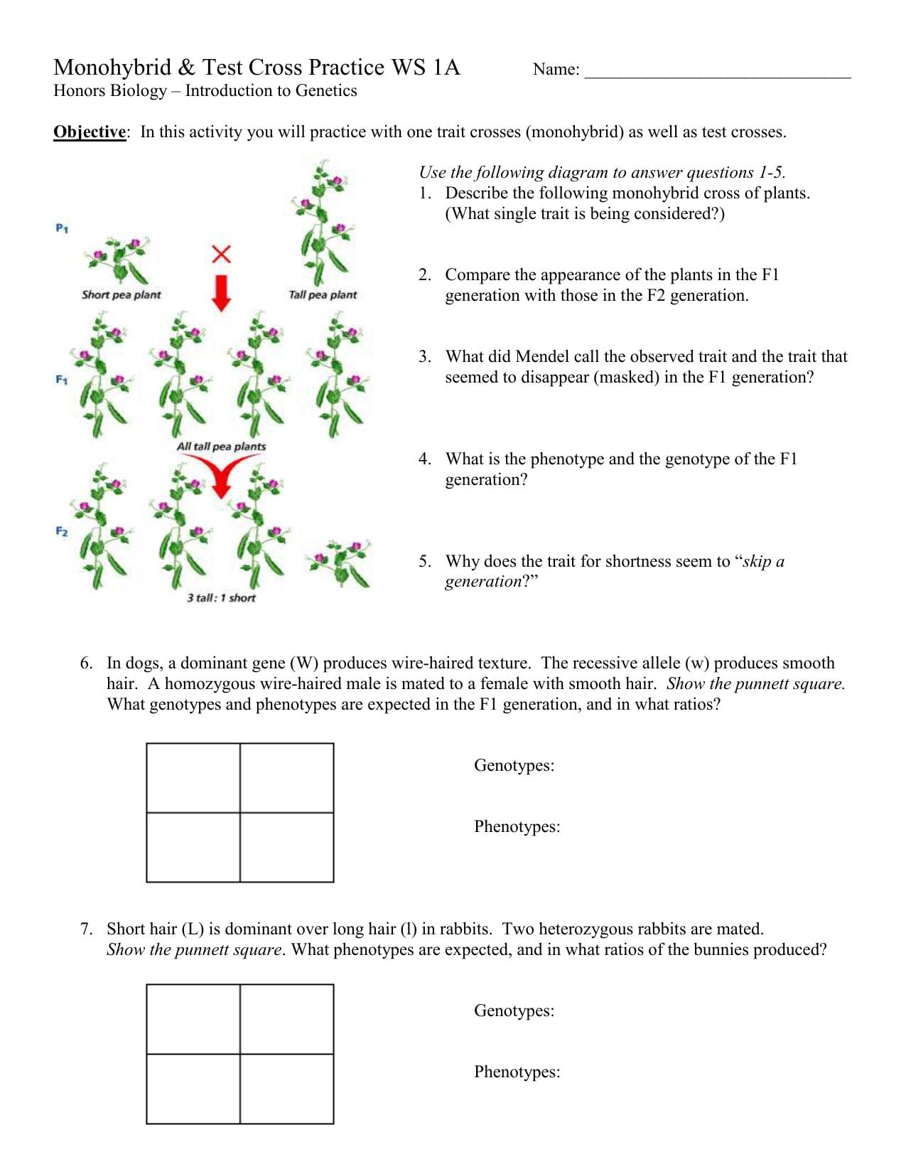 Monohybrid And Test Cross Practice With Regard To Genetics Practice Problems 3 Monohybrid Problems Worksheet 1 Answers