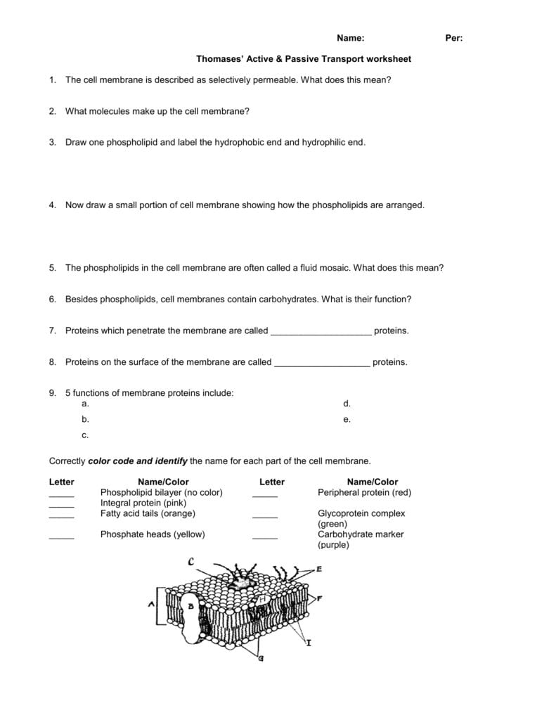 Name Per Thomases' Active  Passive Transport Worksheet 1 The For Passive Transport Worksheet Answers
