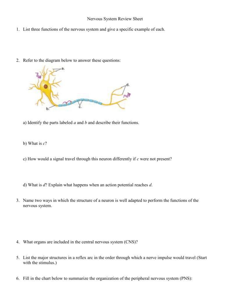 Nervous System Review Sheet Within Neuron Simulation Worksheet Answers
