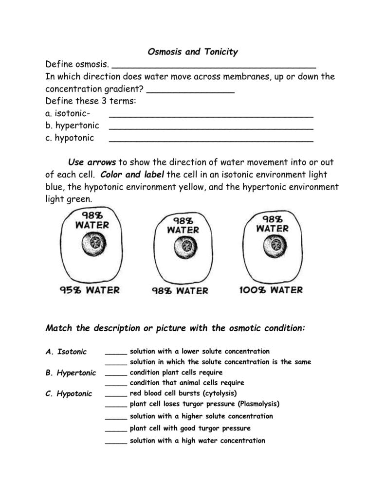 Osmosis And Tonicity Worksheet Inside Water Potential And Osmosis Worksheet Answers