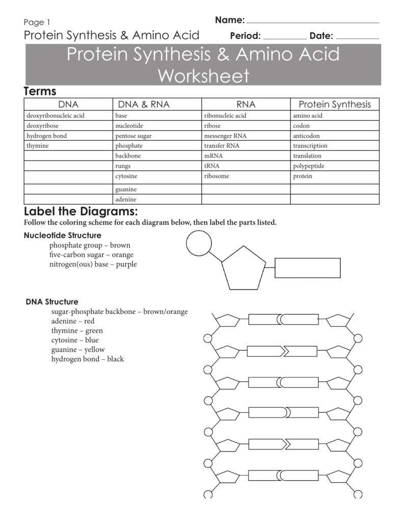 Protein Synthesis  Amino Acid Worksheet Within Protein Synthesis And Amino Acid Worksheet Answers