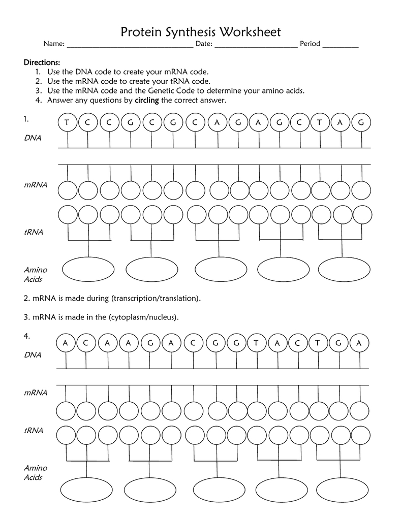 Protein Synthesis Worksheet Or Protein Synthesis Worksheet