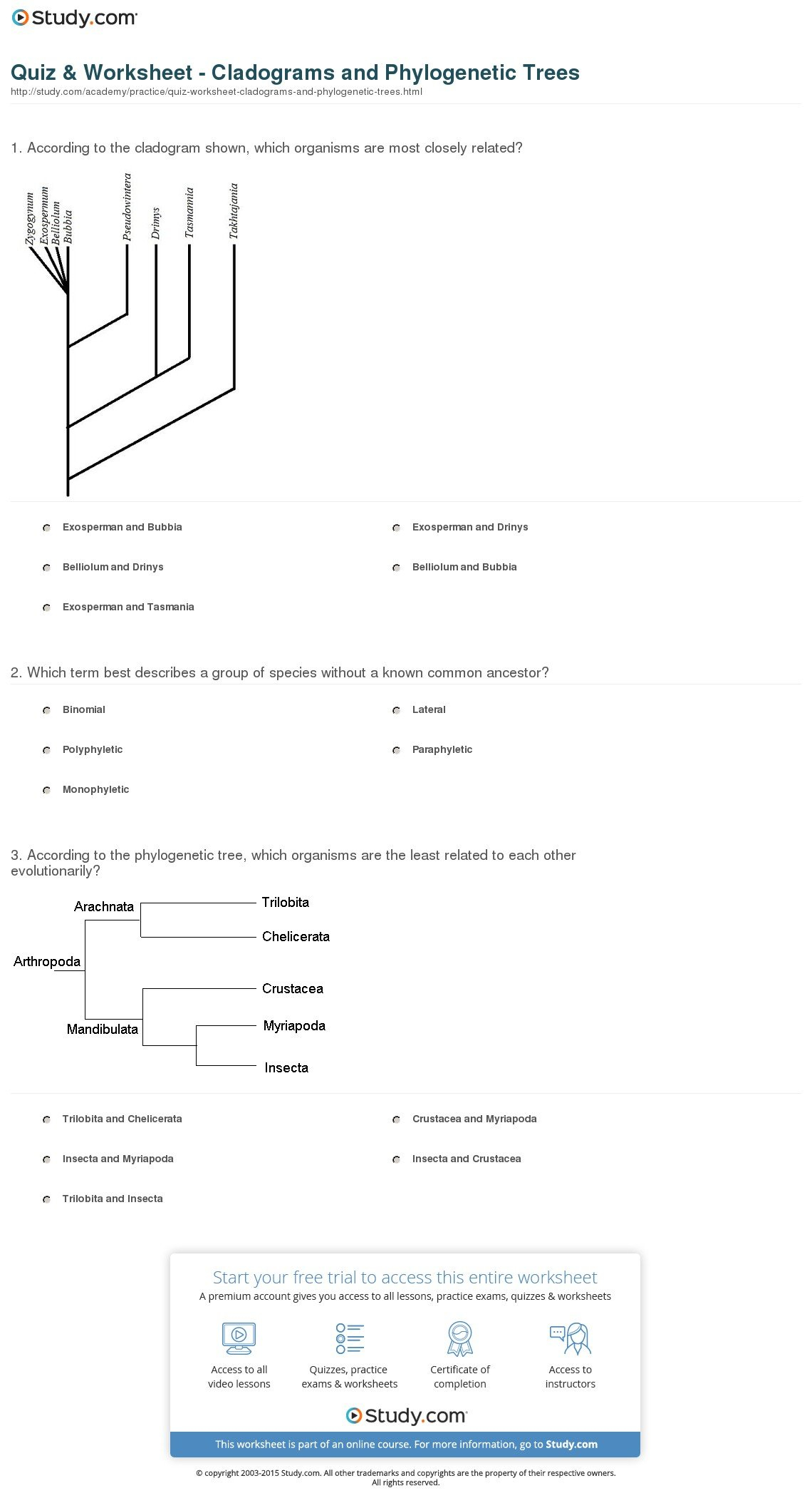 Quiz  Worksheet  Cladograms And Phylogenetic Trees  Study For Cladogram Worksheet Answers