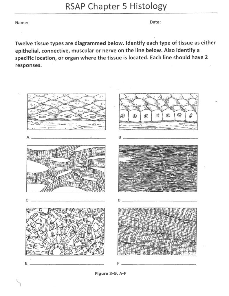 Rsap Chapter 5 Histology Inside Body Tissues Worksheet
