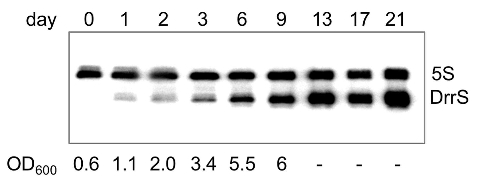 Section 9 2 Review Genetic Crosses Worksheet Answers  Briefencounters Also Section 9 2 Review Genetic Crosses Worksheet Answers