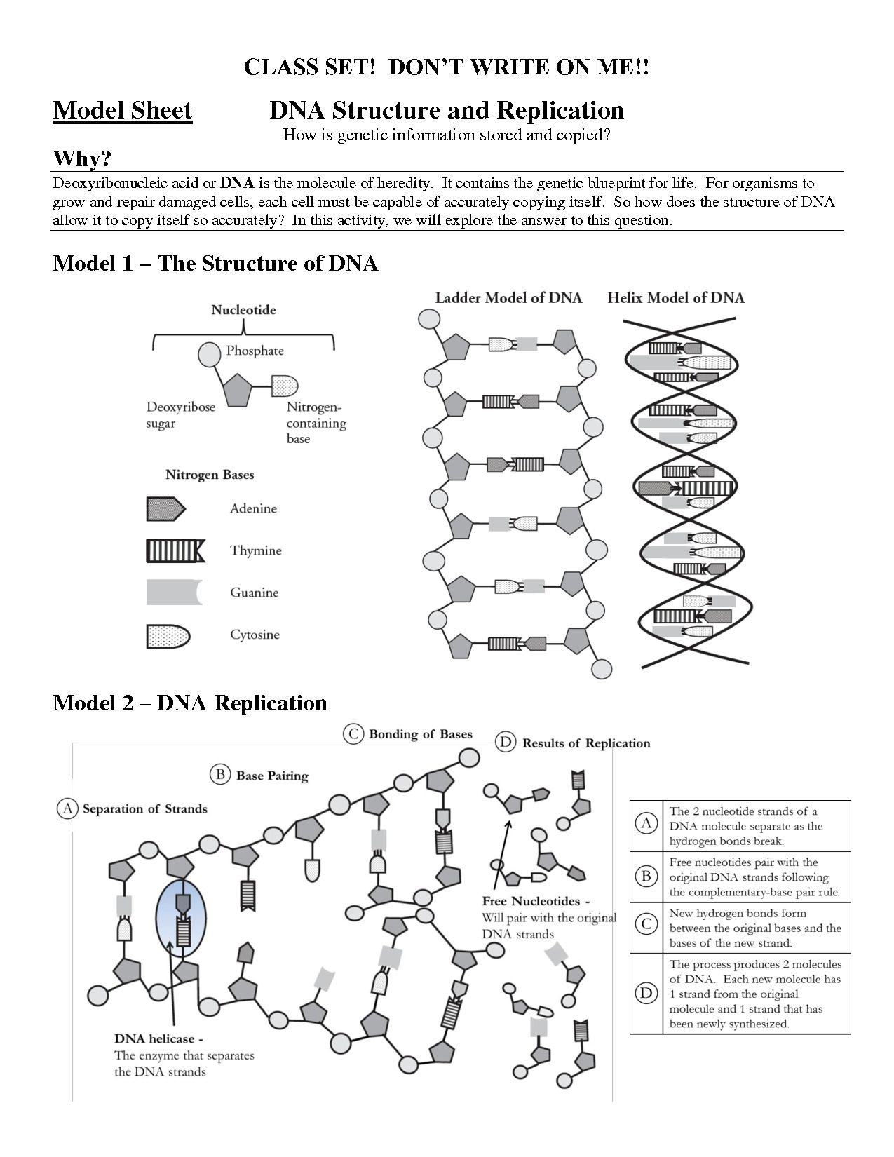 Structure Of Dna And Replication Worksheet Answers  Briefencounters Throughout Structure Of Dna And Replication Worksheet Answers
