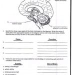 The Brain Worksheets High School  Learning Sample For Educations Pertaining To Brain Games Printable Worksheets For Adults