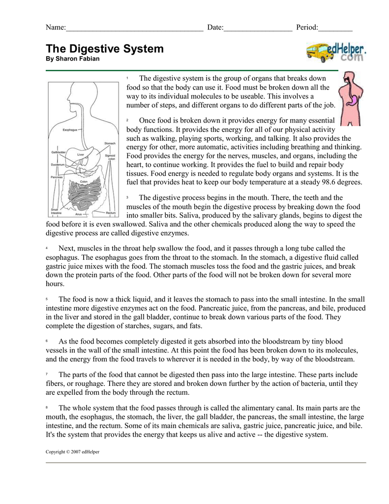 The Digestive System Together With Digestion Worksheet Answer Key