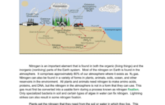 The Nitrogen Cycle Student Worksheet or The Nitrogen Cycle Student Worksheet Answers