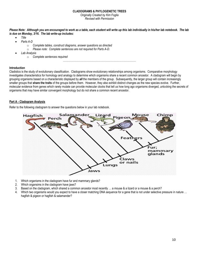 The World's Best Photos Of Cladogram And Worksheet  Flickr Hive Mind With Cladogram Worksheet Answers